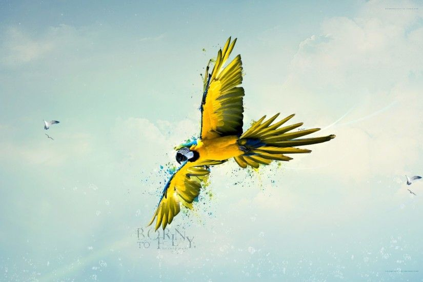 Flying Birds Wallpapers Free Download | Free Desk Wallpapers