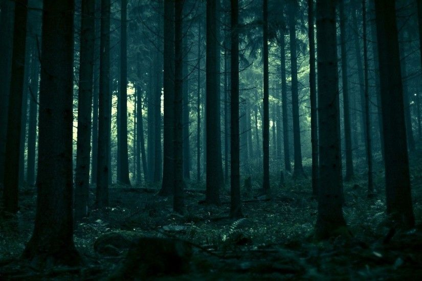 Dark Forest HD Photo Wallpaper - HD Wallpapers