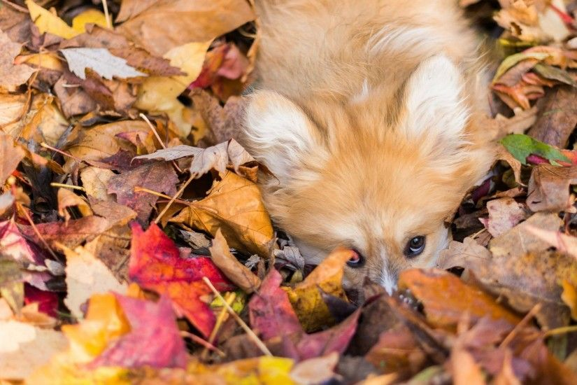 Fall Tag - Autumn Nature Fall Forest Landscape Tree Leaves Dog Photos Free  for HD 16