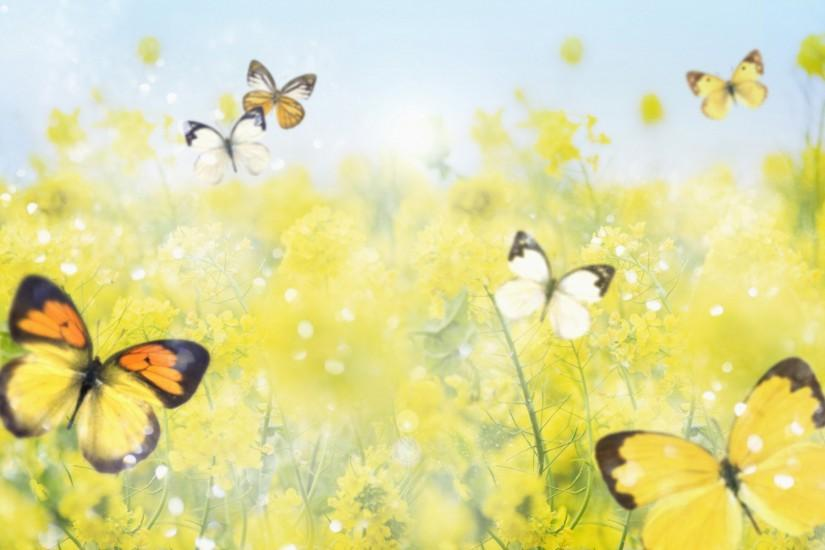 Tags: 1920x1200 Butterfly Background