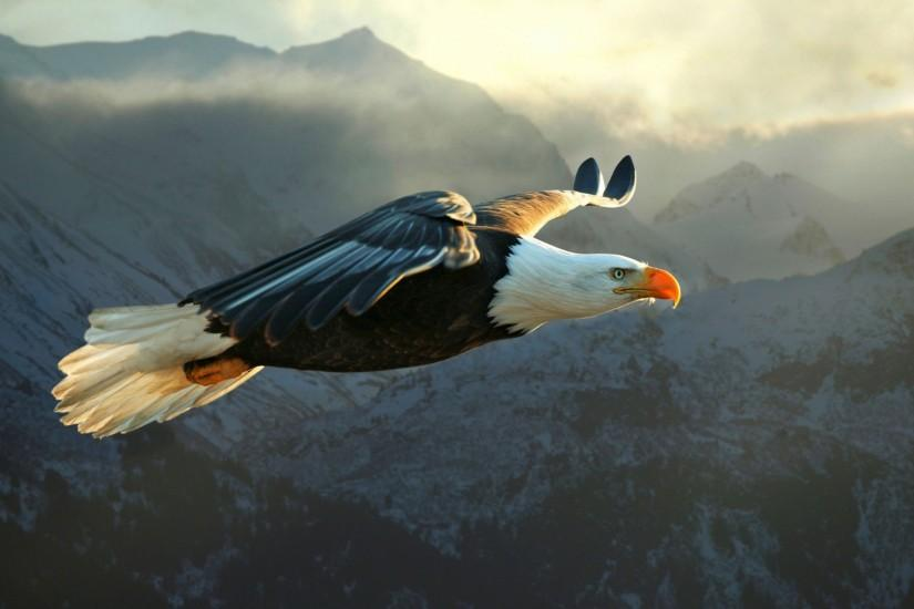 Wallpaper HD Big Eagle Flying