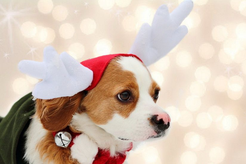 Christmas Wallpapers Dogs