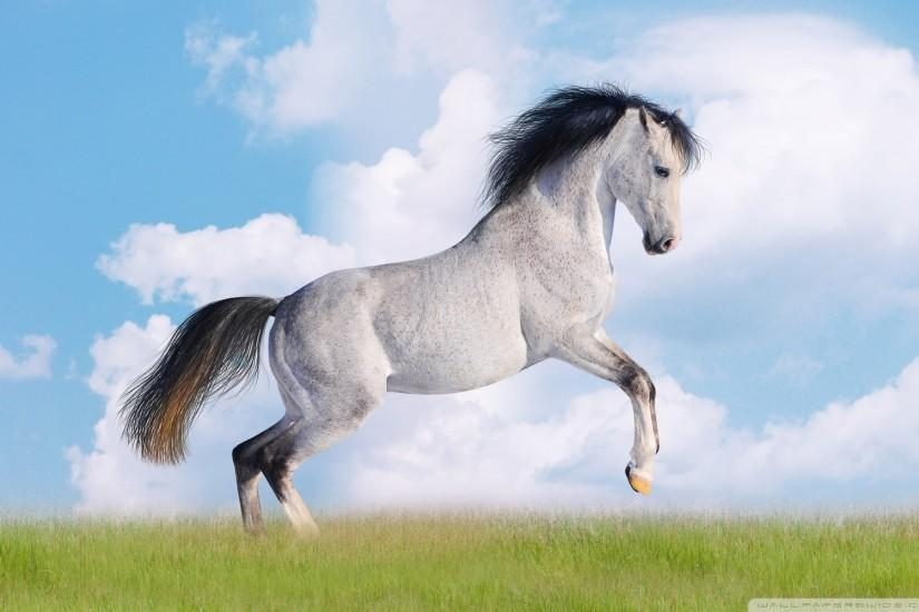 free horse wallpaper 1920x1200 image