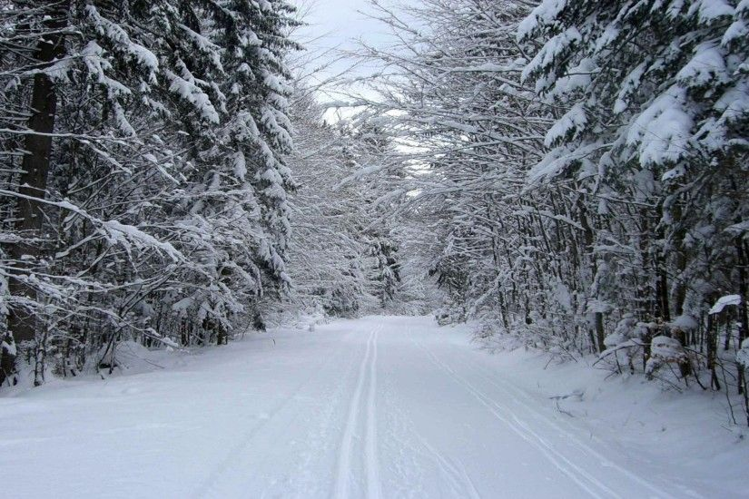 Snowy Forest & Road wallpapers and stock photos