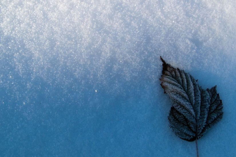 snow wallpaper leaf. Â«Â«