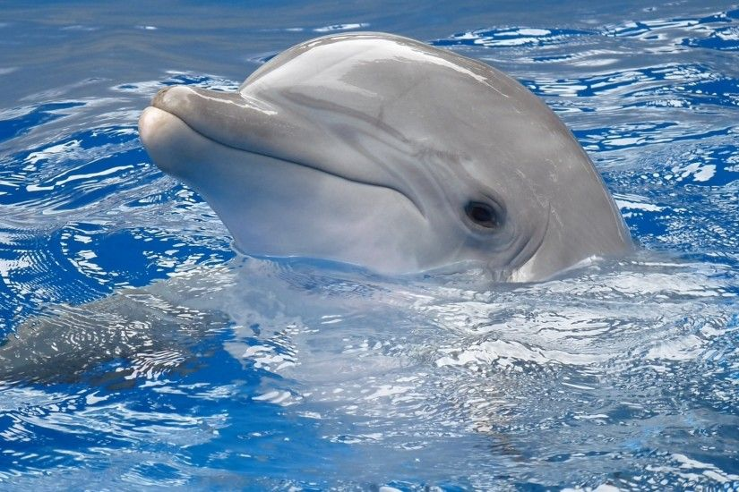 Cute Baby Dolphins Wallpapers for Android. Get high-quality pictures of  Cute Baby Dolphins! Wallpapers of Cute Baby Dolphins just make us happy and  that's ...