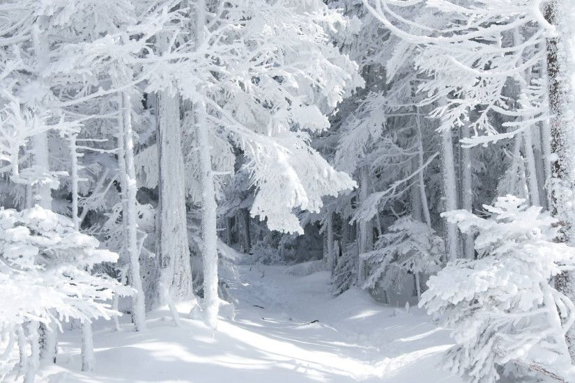 Winter Forest Wallpapers, 44 Winter Forest HDQ Images | Wallpapers .