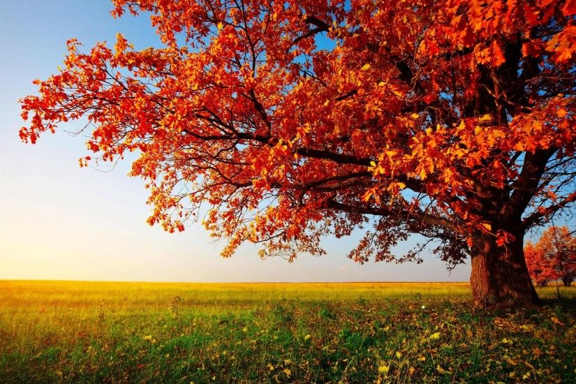 Trees Wallpaper 2000×1376 Trees Wallpaper (42 Wallpapers) | Adorable  Wallpapers