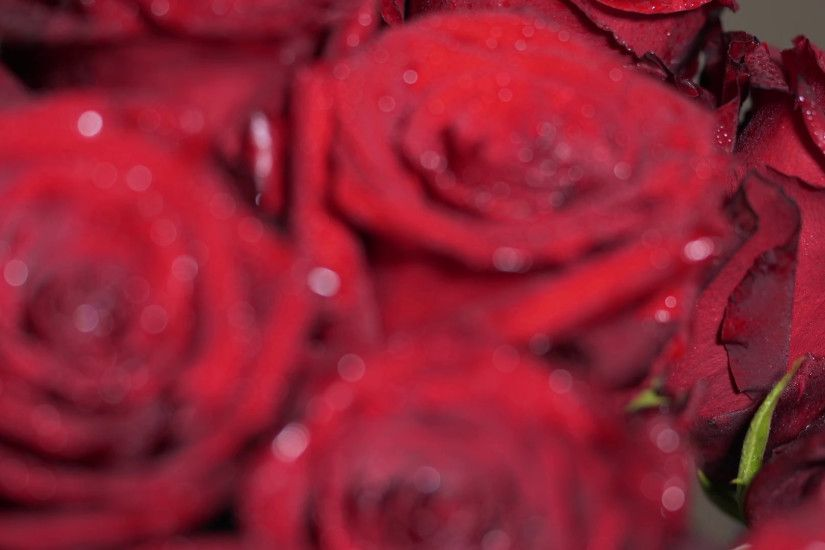 Red roses bunch flowers bouquet background. Red rose bud focus motion  movement. Water drops