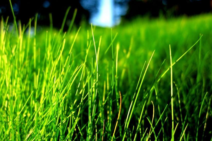 most popular grass wallpaper 1920x1440