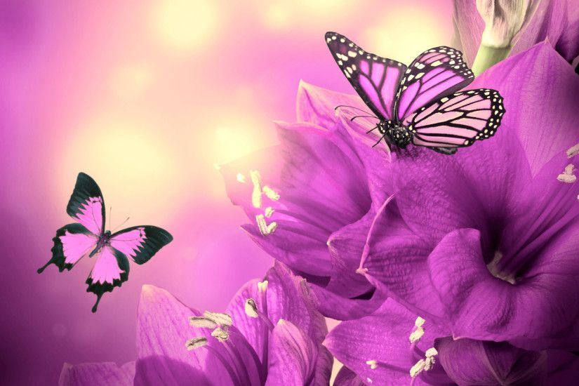 ... Free Butterfly Wallpapers Hd Â« Long Wallpapers ...