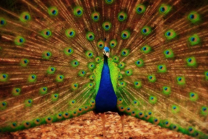 3d Peacock HD Wallpapers - HD Wallpapers Inn