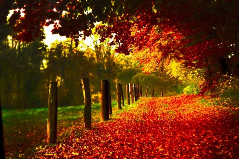 Red Autumn Scenery
