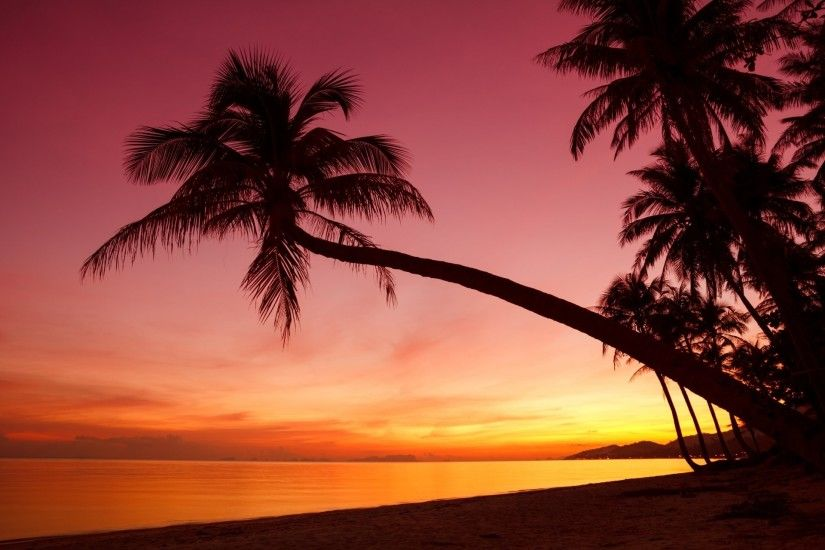 tropical sunset weeping palm trees silhouette shore ocean sea beach  beautiful scene nature landscape sky rain