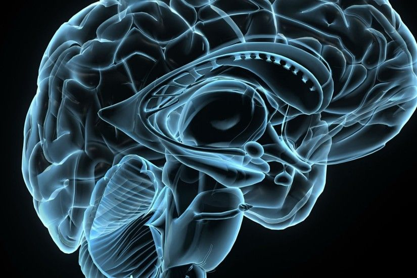 Brain anatomy wallpaper wallpapertag - Brain wallpaper 3d ...