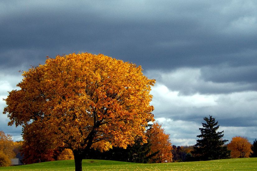 Autumn · Autumn trees | autumn wallpaper ...