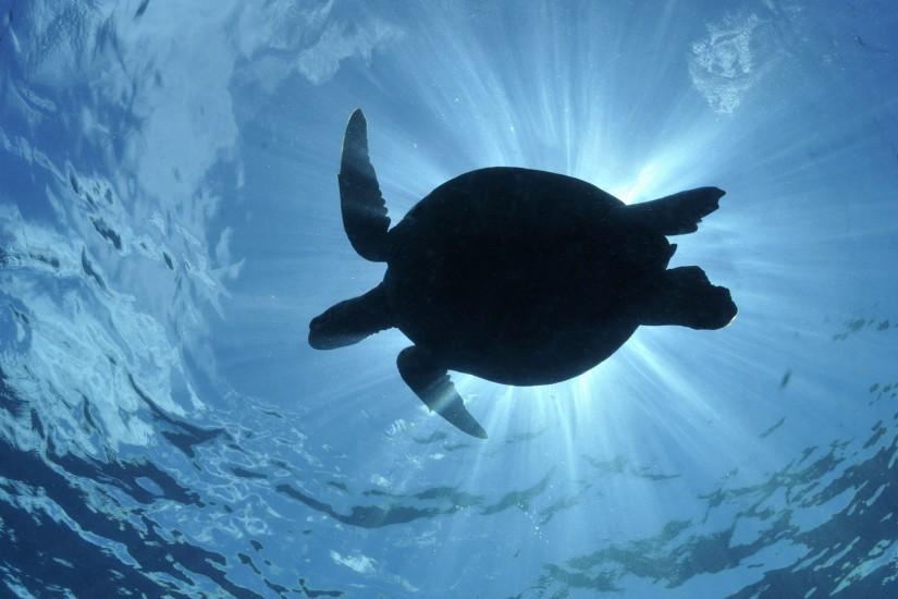 Turtle Under The Sea Desktop Background ...