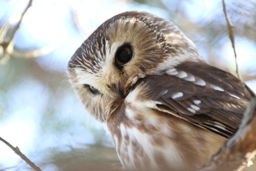 wallpaper.wiki-Cute-Owl-Picture-Free-Download-PIC-