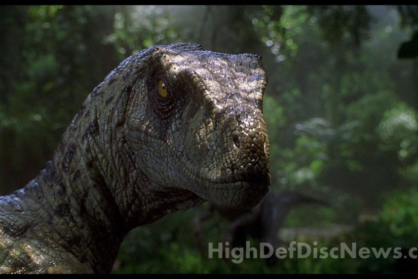 Wallpapers For > Jurassic Park 3 Velociraptor Wallpaper