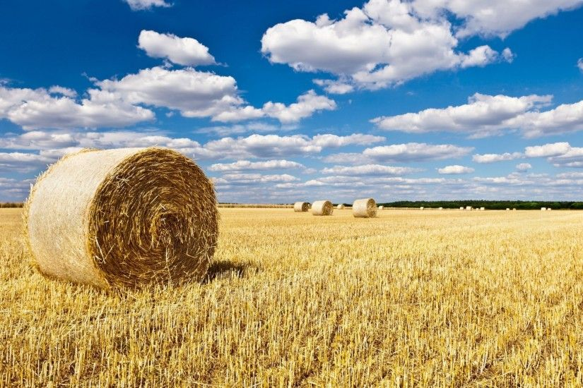 nature landscape the field of the field haystack hay sky background  wallpaper widescreen full screen widescreen