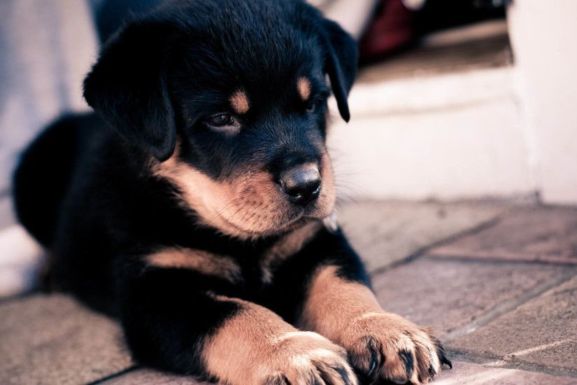 Cute Dogs Wallpaper 6334