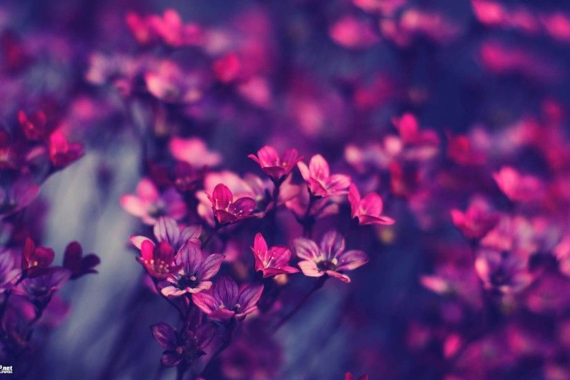 Vintage flower backgrounds, Vintage floral patterns and Background