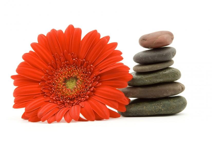 Flowers stones pebbles white background wallpaper | 1920x1200 | 185375 |  WallpaperUP