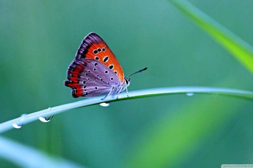 Free Pink Butterfly Wallpapers Images Â« Long Wallpapers ...