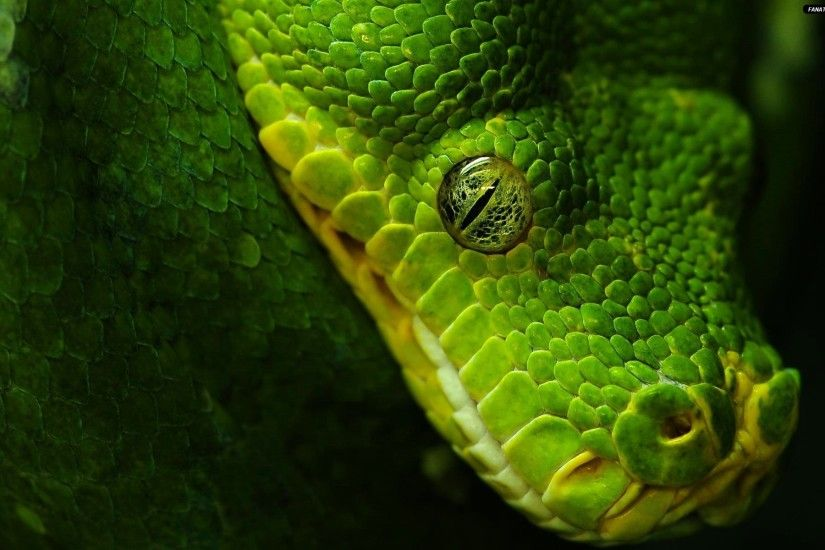 0 Python Programming Wallpaper Python Set Wallpaper