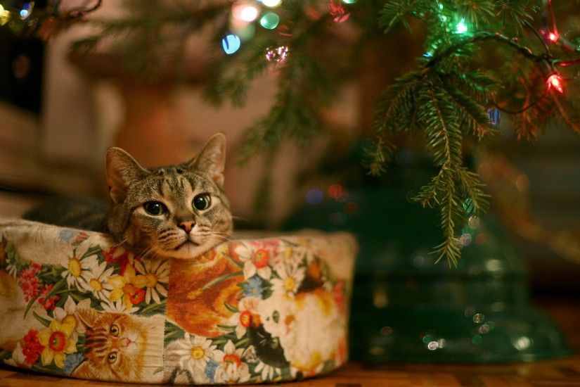 Kitty For Christmas Google Themes