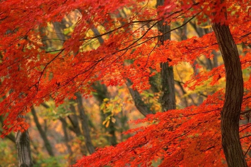beautiful-autumn-wallpapers- (1)