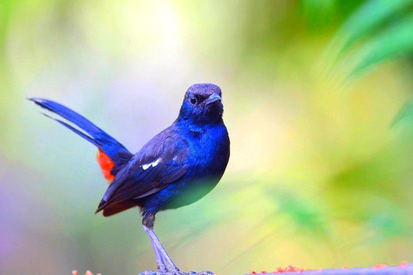 Large Blue Bird Wallpaper