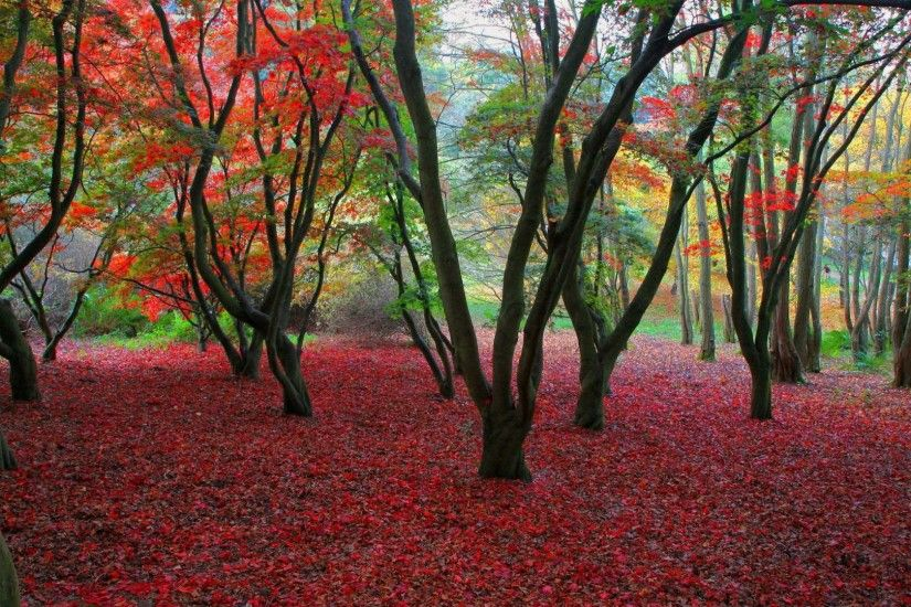 Pink Soil By Dry Leafs | HD Nature Wallpaper Free Download ...