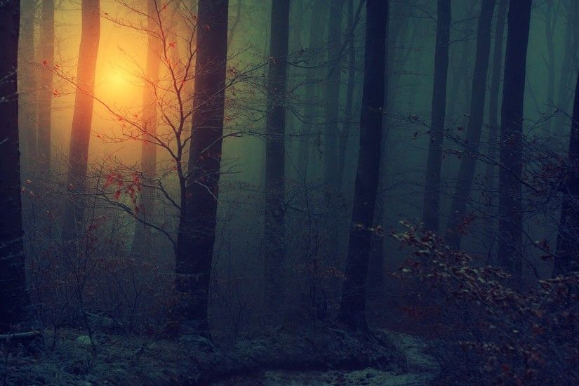 nature landscapes trees forest sunlight fog mist dark #1 · Spooky WoodsMisty  ForestWallpaper ...