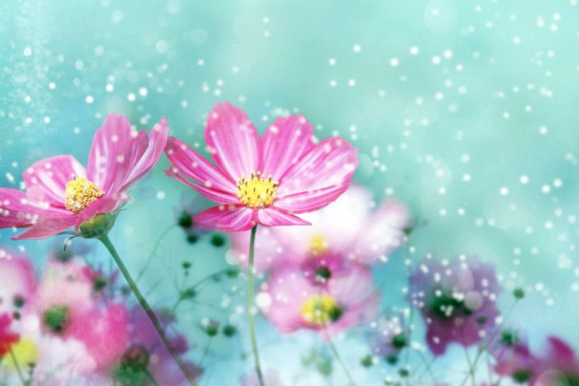 40 BEAUTIFUL FLOWER WALLPAPERS FREE TO DOWNLOAD | Flower wallpaper .