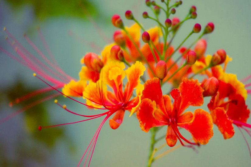 Exotic Orange Flower Wallpaper