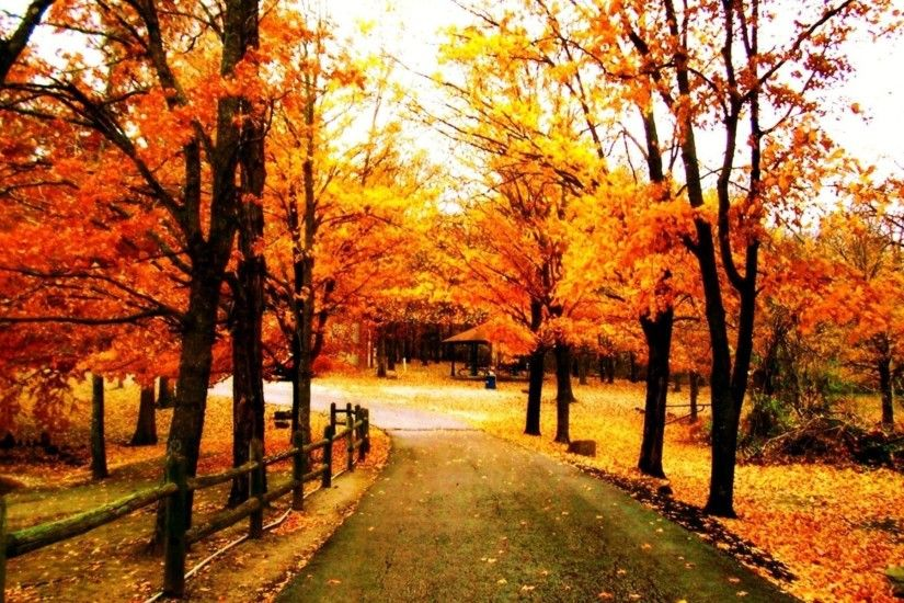 Pix For > Pretty Fall Trees Wallpaper