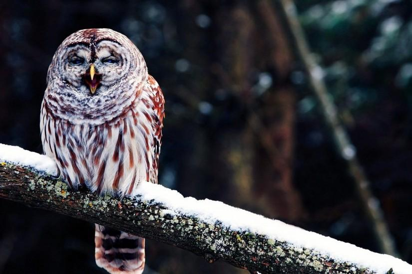 download free owl wallpaper 1920x1080 for htc
