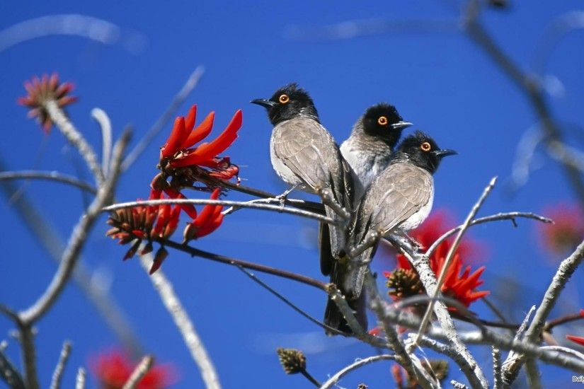 ... Nature Love Birds Wallpaper Hd 14 Widescreen Birds Hd Desktop  Backgrounds Page On Nature Love Wallpaper ...