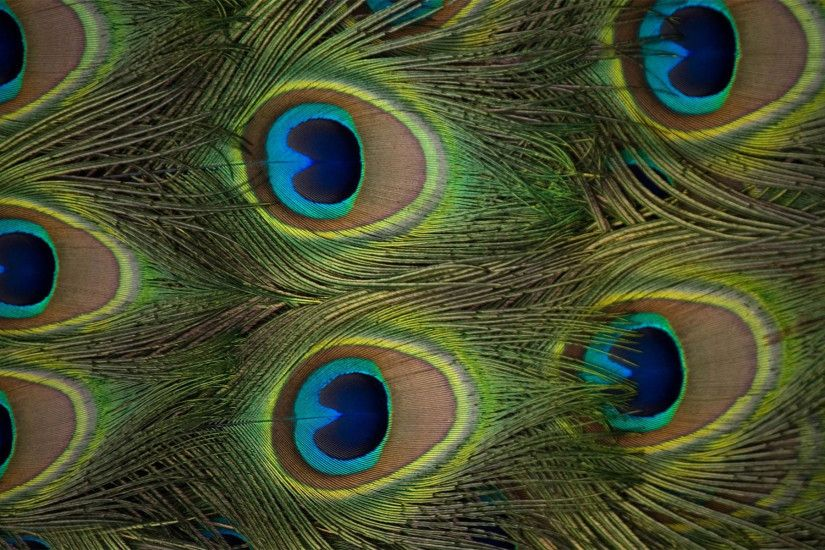 ... Peacock feather with flute wallpaper hd - photo#21 ...
