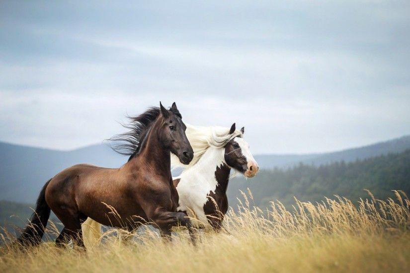 ... wild horses wallpaper | HD Animals Wallpapers: White Wild Horses .