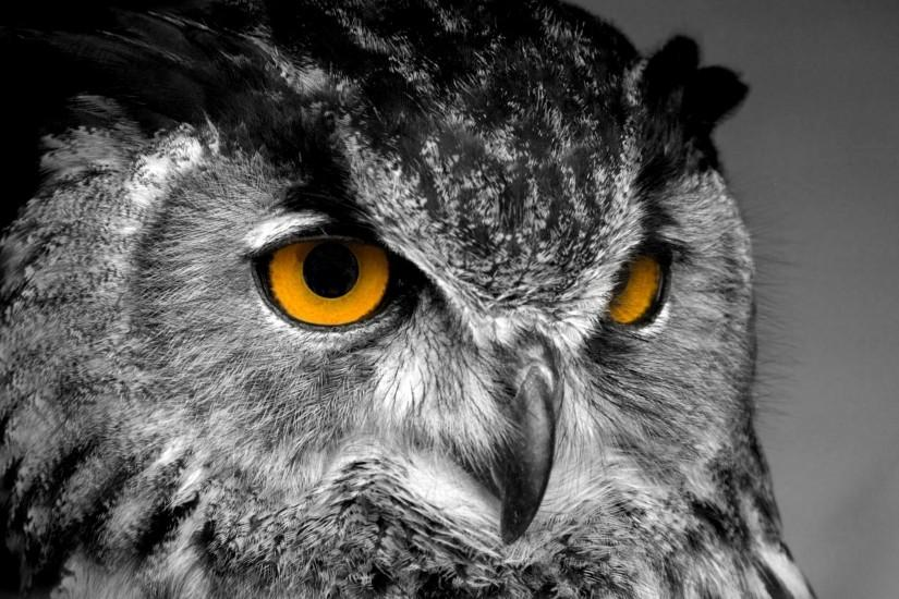 full size owl wallpaper 2560x1600 for hd 1080p