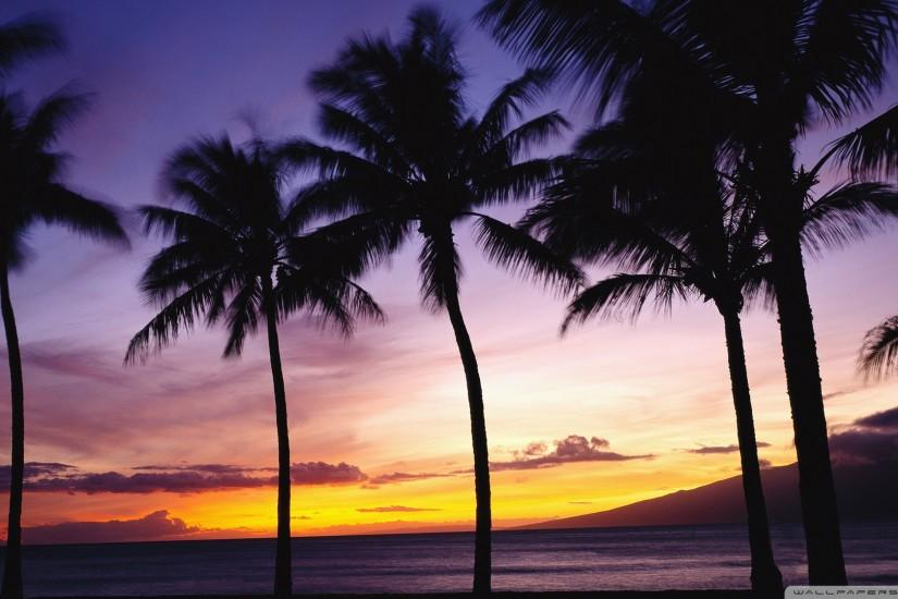Image for Beach Sunset With Palm Trees Wallpaper Free Desktop