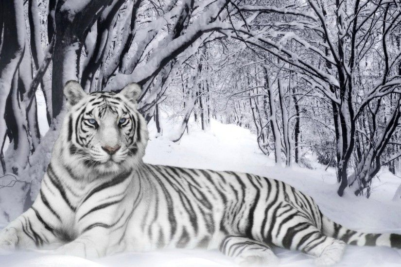 White Tiger Wallpaper Phone