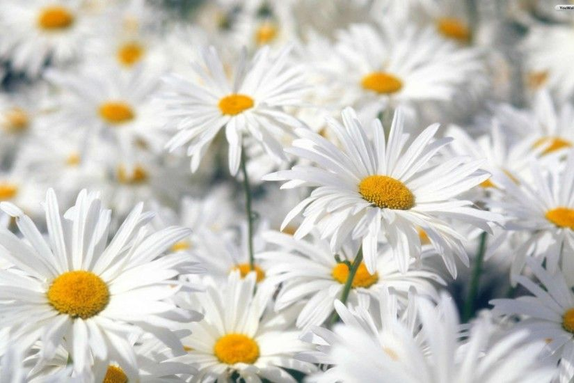 Free Wallpapers For Desktop Spring Flowers