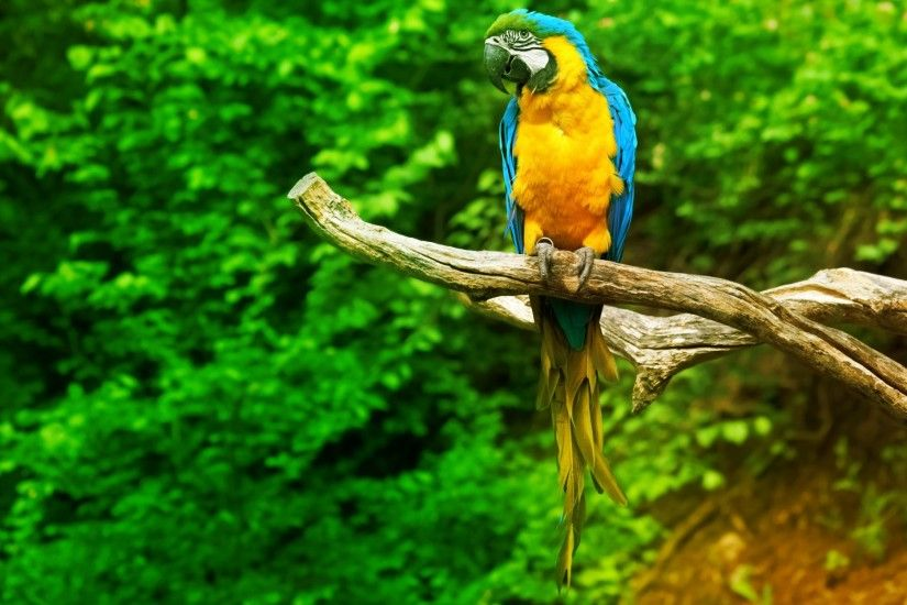 Animal Wallpaper A Macaws