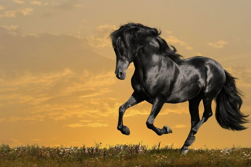 images of beauty | ... black beauty free horse wallpaper black beauty  wallpaper download