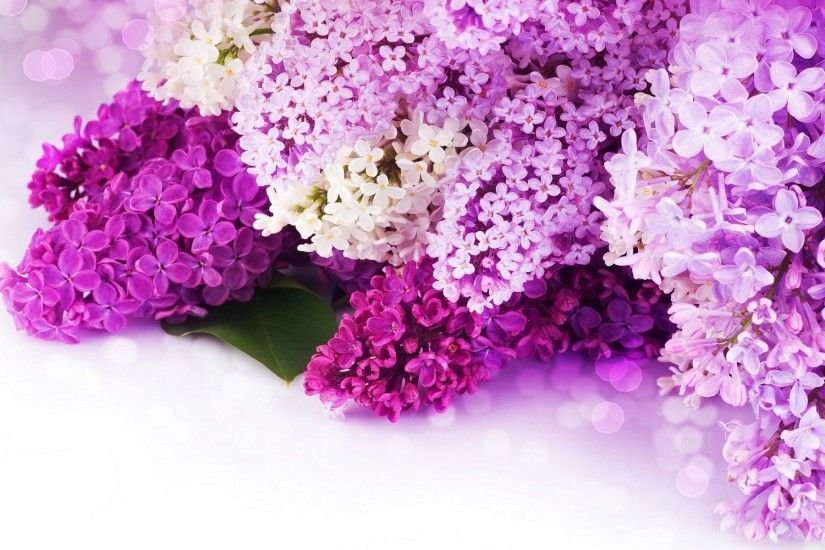 purple flowers background - Google Search