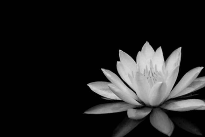 black and white flowers wallpapers #11506