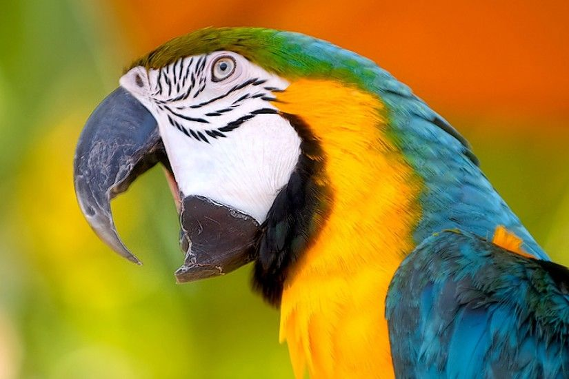 Colorful Wild Parrot Wallpapers